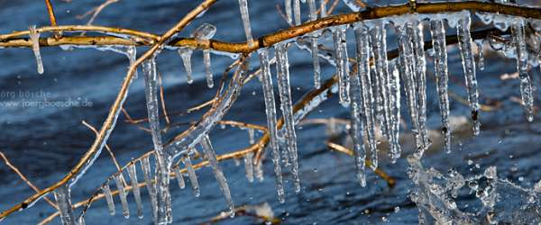 Kristallklare Eiszapfen an Sträuchern am Zwischenahner Meer im März 2013