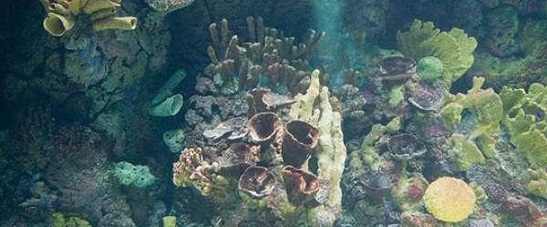 Korallen-Riff im Burgers' Zoo in Arnheim, Holland.