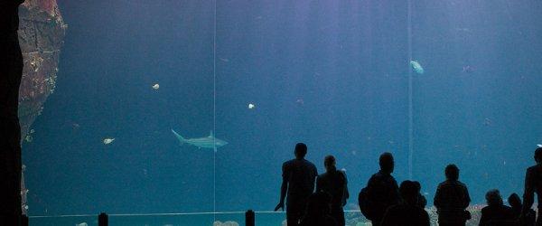 Ocean Wasserwelt mit großer Plexiglasscheibe im Burgers' Zoo in Arnheim, Holland.