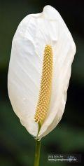 Detailaufnahme - Blüte einer Pflanze im Burgers' Zoo in Arnheim, Holland.