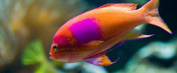 Zoologischer Garten Frankfurt - Fisch-Aquarium