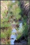 Goldenstedter Moor