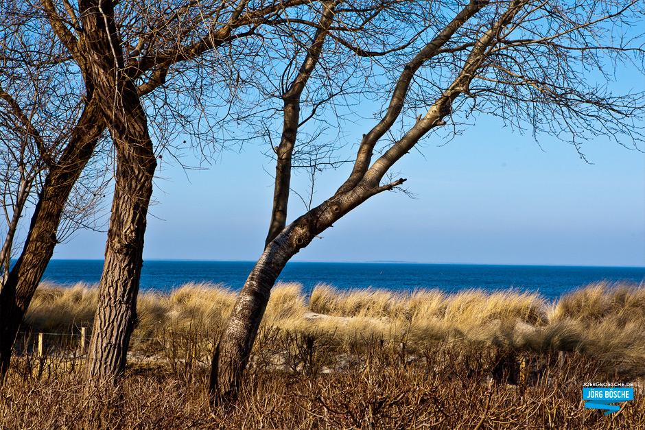 Bäume vor Seegras in Lubmin, Greifswald