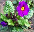 Pflanzen / Blumen im Garten