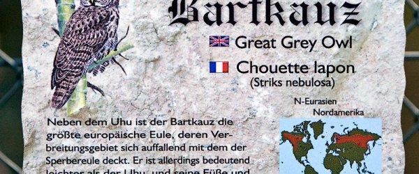 Bartkauz - Vogelpark Walsrode