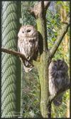 Vogelpark Walsrode (30-03-2008)