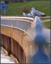 Weserwehr in den Abendstunden am Ostersonntag (23-03-2008)