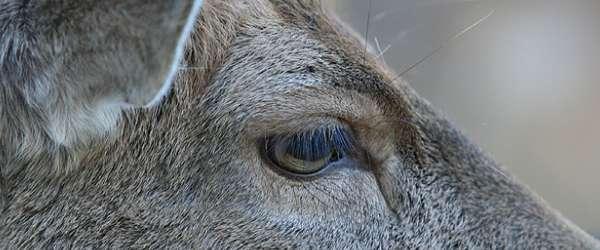 Wildpark-Lueneburger-Heide - 14-10-2007