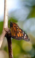 Im Reich der tropischen Schmetterlinge in der botanika Bremen