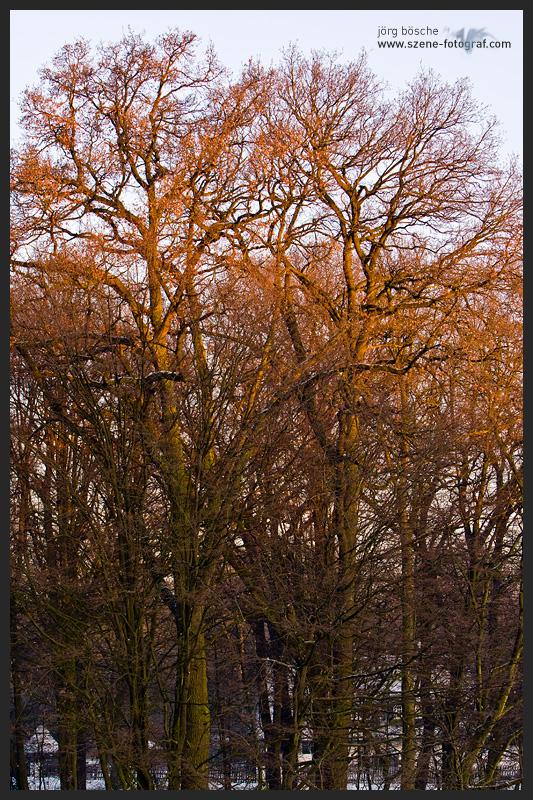 Sonnenaufgang über den Bäumen im Bürgerpark Bremen